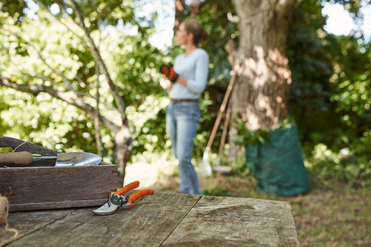 Viljapuude ja marjapõõsaste kevadine hoolduslõikus