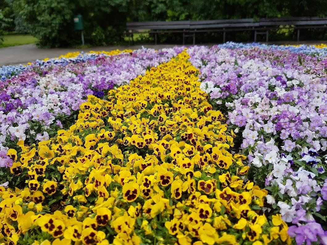 Kevadist aiailu loovad võõrasemad